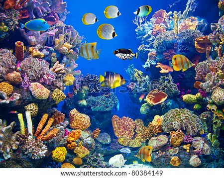 Colorful aquarium, showing different  fishes swimming - stock photo
