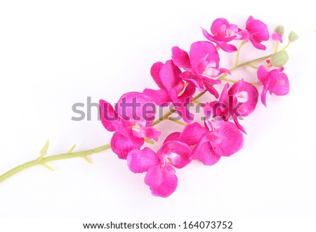 Colorful artificial orchid flowers isolated on white background