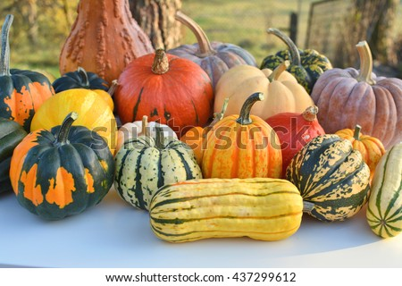 Colorful autumn decoration of pumpkins and squashes varieties - stock photo