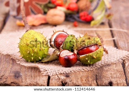 colorful autumn decoration on wooden table, in foreground busted chestnuts on a gunny bag - stock photo