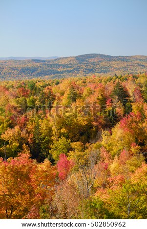 Colorful Autumn fall trees and scrub bushes and the Vermont mountains