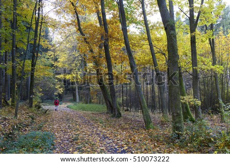 Colorful autumn Forest in south Bohemia, Czech Republic