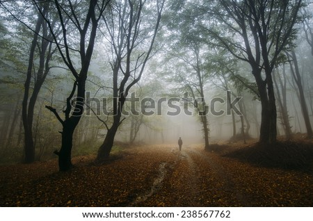 colorful autumn in forest with man on road and leaves on ground - stock photo