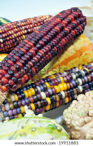 Colorful autumn indian corn and gourds on a light background