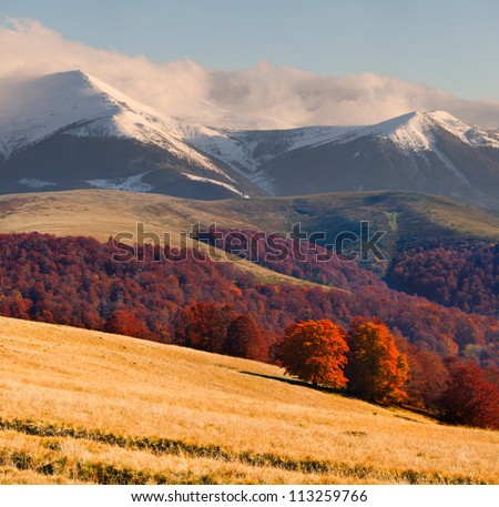 Colorful autumn landscape in the Carpathian mountains - stock photo