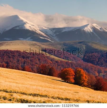Colorful autumn landscape in the Carpathian mountains - stock photo