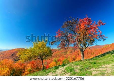 Colorful autumn landscape in the Carpathian mountains. Transylvania,Romania. Europe. - stock photo