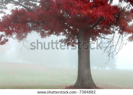 colorful autumn landscape scene in foggy misty morning - stock photo