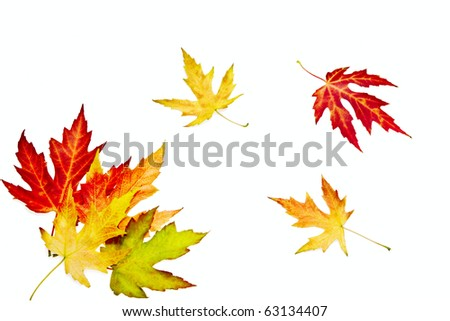 Colorful autumn leaves - stock photo