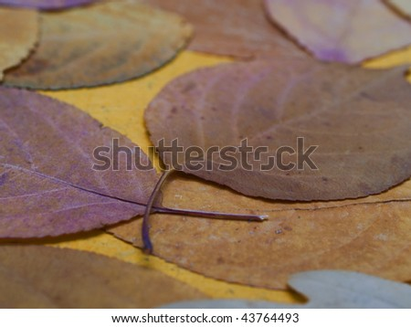 colorful autumn leaves ? background