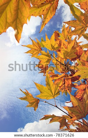 Colorful autumn leaves, background - stock photo