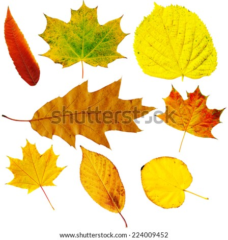 Colorful autumn leaves - birch, maple, oak, willow - stock photo