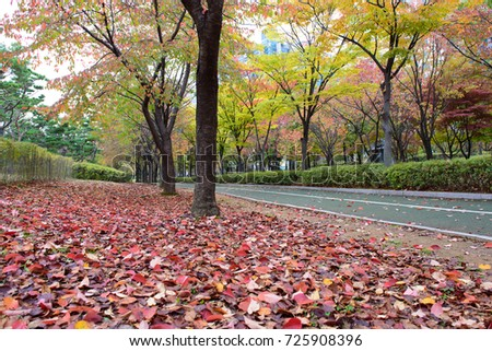 Colorful autumn leaves carpet on ground and trees and walkway for exercise in public park, Korea