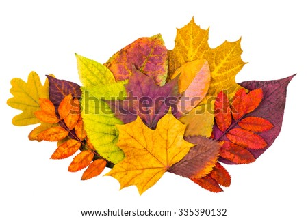 Colorful autumn leaves collection isolated on white background