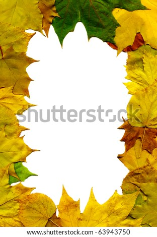 Colorful autumn leaves fall frame isolated