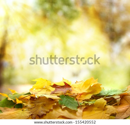 Colorful autumn leaves in forest with sunshine - stock photo