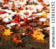 Colorful autumn leaves in the first snow. - stock photo