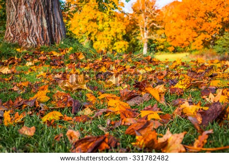 Colorful autumn leaves in the grass in a park