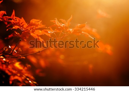 colorful autumn leaves on tree branch. natural background - stock photo