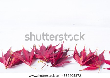 colorful autumn leaves on white wooden table background