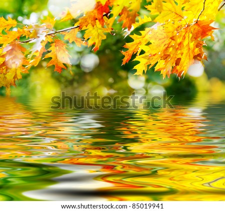 colorful autumn leaves reflecting in the water - stock photo