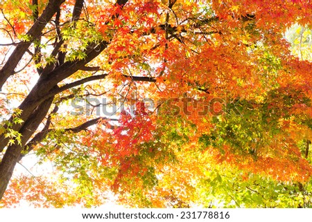 Colorful Autumn Leaves with Sunlight  - stock photo