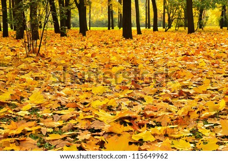Colorful autumn maple leaves in the park - stock photo