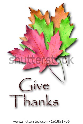 Colorful autumn maple leaves on white background