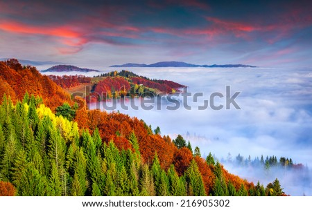 Colorful autumn morning in the Carpathian mountains. Sokilsky ridge, Ukraine, Europe. - stock photo