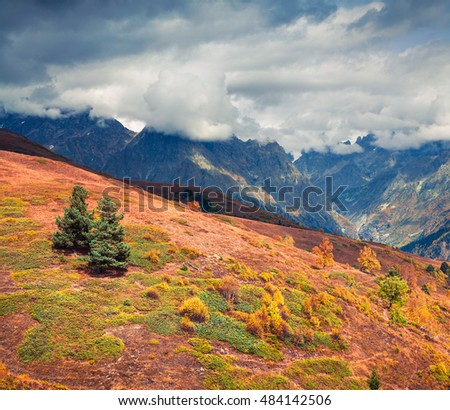 Colorful autumn scene in the Caucasus mountains. Beautiful landscape with two fir trees on the slope in the Upper Svaneti, Georgia, Europe. Artistic style post processed photo.