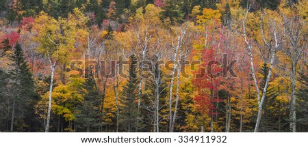 Colorful autumn tree colors as a background - stock photo