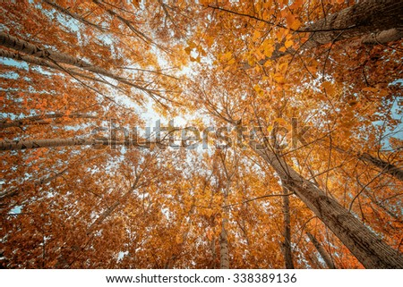 Colorful autumn trees in forest - stock photo