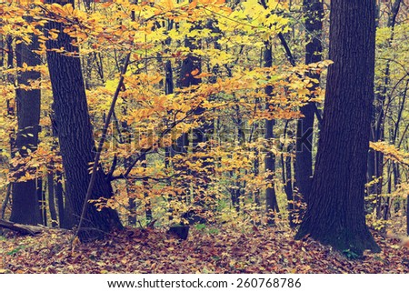 Colorful autumn trees in forest, vintage look - stock photo
