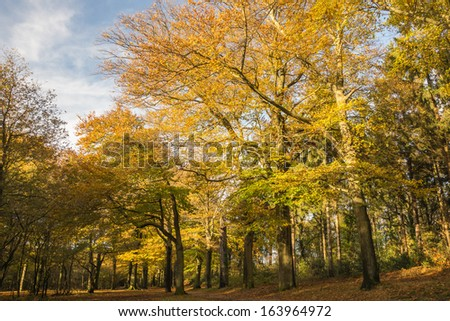 Colorful autumn trees in the forest - stock photo