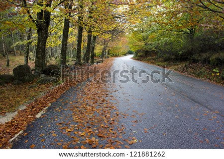 Colorful autumn trees on a winding country road