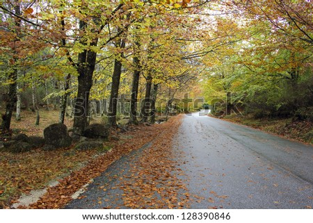 Colorful autumn trees on a winding country road - stock photo