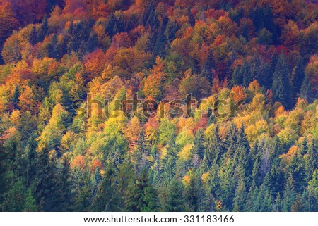 colorful autumn trees on the hill in mountain forest at fall season, abstract background  - stock photo