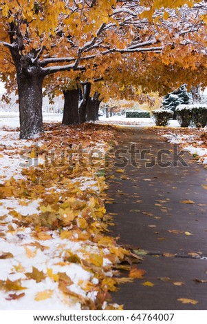 Colorful autumn trees with snow, Blackfoot Idaho