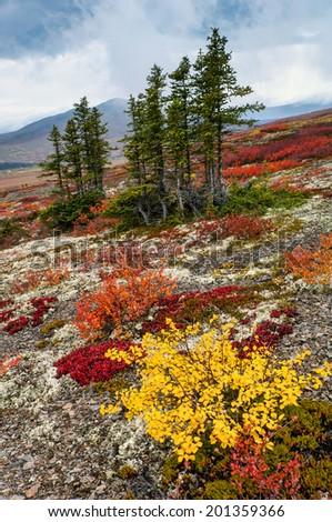 colorful autumn tundra of Canadian Yukon Territory on rainy afternoon - stock photo