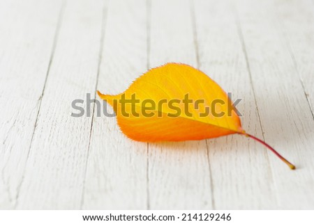 colorful autumnal cherry leaves on white wood background - stock photo
