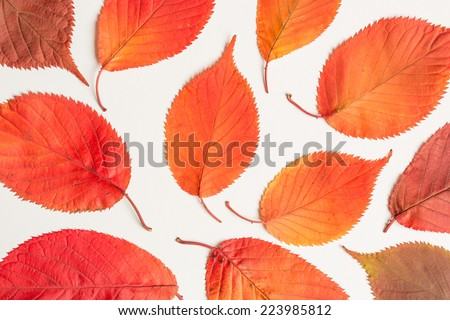 colorful autumnal leaves - stock photo