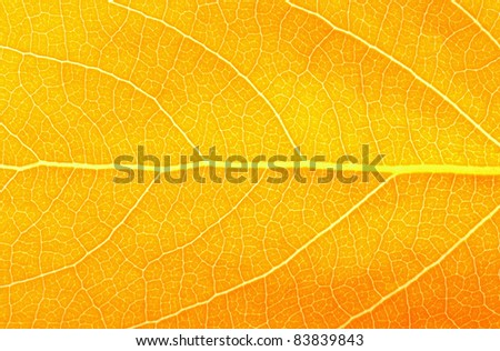 Colorful background of autumn leaf - stock photo