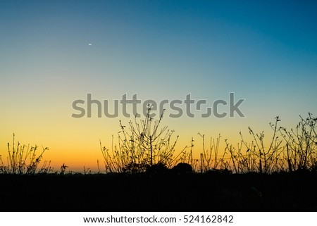 Colorful background sunrise on peach garden at moring hours
