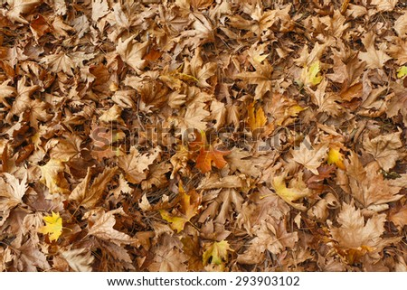 Colorful backround image of fallen autumn leaves. - stock photo