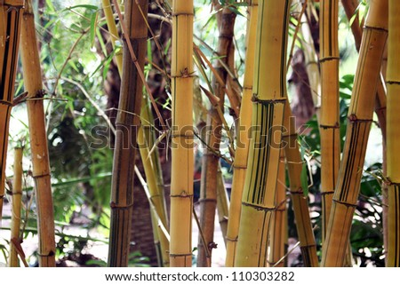 Colorful Bamboo Trunks in Sunlight in tropic forest