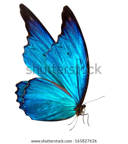 colorful beautiful butterfly close-up a macro background - stock photo
