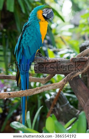 Colorful beautiful macaw sitting on log.