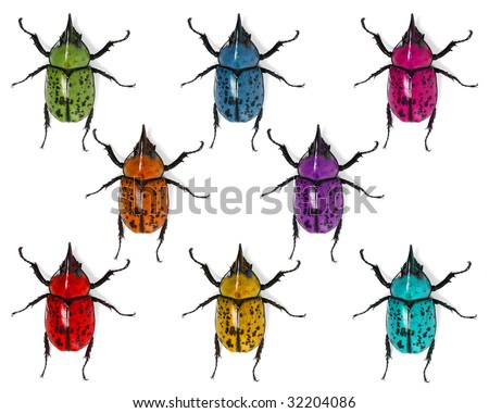 Colorful Beetles - stock photo