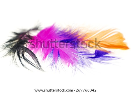 Colorful bird feathers on a white background close-ups