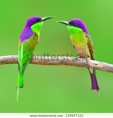 Colorful Bird on green background - stock photo